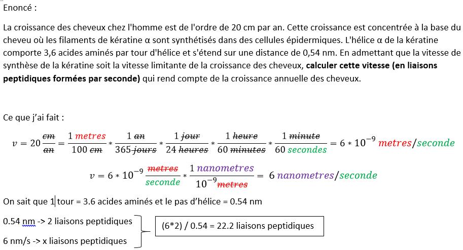 Exercice Biochimie : Calcul de la vitesse de croissance en liaisons peptidiques par seconde